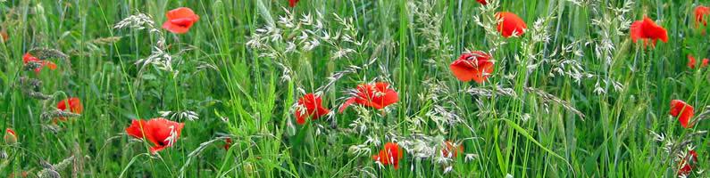 flowers field dbt